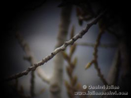 Branches 2 by Revolt666