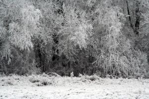 winterland 33 by priesteres-stock