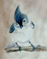 Tufted titmouse by Lady-Natsuki