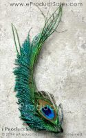 Iridescent Peacock feather AZURE hair clip jewelry by eProductSales
