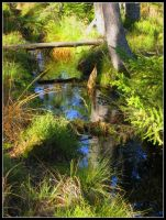 bog forest by Laoche13