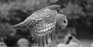 BW Beauty in Flight by aameliaa