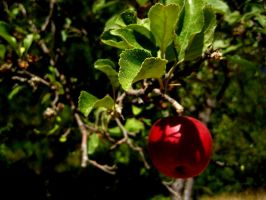 AppleTree by cyclone866