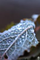 leafdrup by FMpicturs
