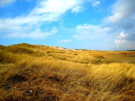 Dunes by Photo-Queen6