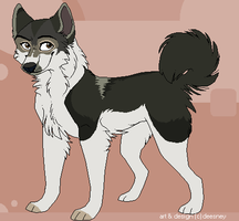 Malamute Adoptable-SOLD by Deesney