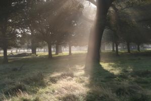 stock...  Natural sunrays by RhysBriers