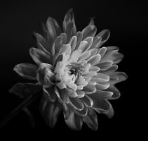monochrome by Bactaboy