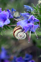 Snail on blossom by SAW-Taylor