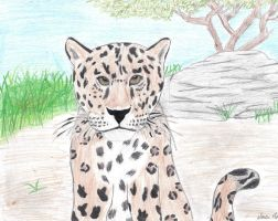 Leopard by ZNwolflove
