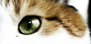 The eye of the tiger by BellaSunny