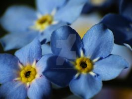 Forget-Me-Nots 7 by zaphotonista
