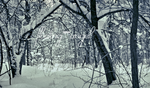 Winter Panoramic #4: Canopy by floating-angel