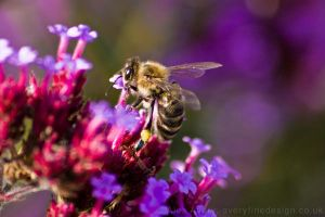 Highlight 12 - Bee by AlexAveryPhotography