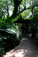 Jungle Path by spaceraptor