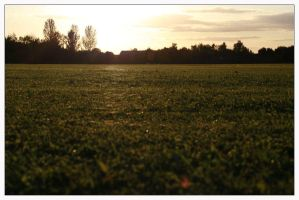 Webbed grass by bwaa