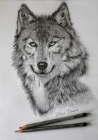 Wolf (Unfinished) by TD-Yukiryuu