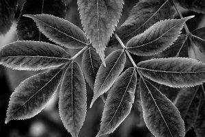 Autumn in black and white by eswendel