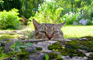 Watching Cat 1480416 by StockProject1