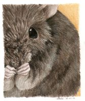 mouse in colorpencil by Liedeke