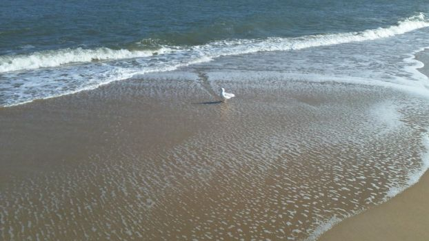 Seagull on the Hunt for Food by Bennuendo