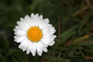 Perfect Daisy Perfect Day by Yoonett