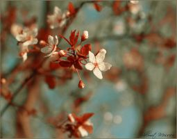 Plum branch by ShlomitMessica