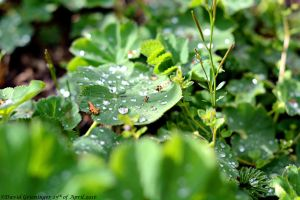 After The Rain by DavidGrieninger