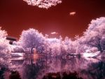 Infrared Lake by DivineSpiral