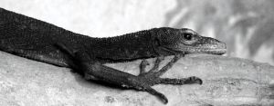 Lounge Lizard by roamingtigress