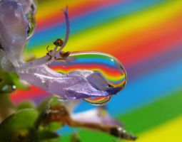 Melting Rainbow by Piombo