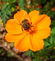 flower blessed with bee by kpza