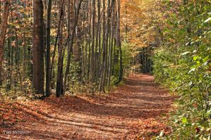 Forest Pathway In Autumn by PaulMcKinnon
