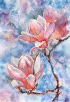 Magnolia Flower 2 by ShastinaHell-N