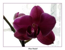 orchid 57 by Halla51
