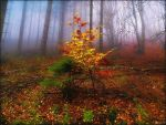 Autumn Fall by Weissglut