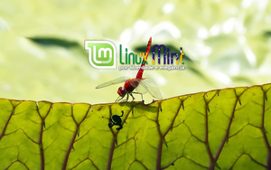 To Linux Mint Brazil [m by malvescardoso