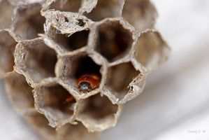 WASP NEST, Part Two by Sandy33311
