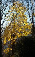 The last yellow tree by TinyWild