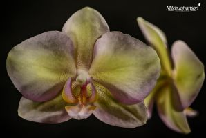 Up Close Pastel HDR by mjohanson