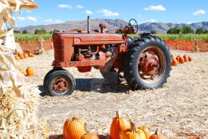 Relic In A Pumpkin Patch by Scooby777