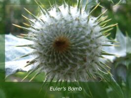 Euler's Bomb by isays