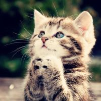 This kitty will pray for you by NikiFlippysDog17890