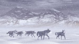 Arctic Wolfes by xmas-kitty