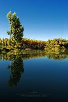 Perfect reflect by markborbely