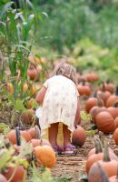 pumpkin patch by shadowtree