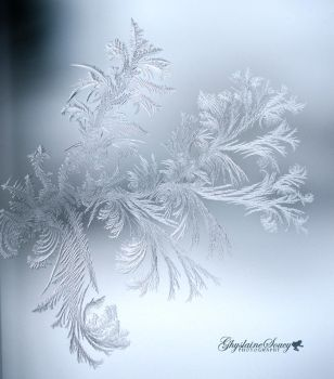 Frost Magical branch by gigi50