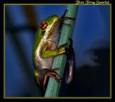 Tree Frog Sunrise by boron