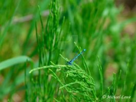 Dragonfly On Plant by FlefasaurusRex