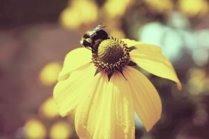 Busy Bee by xTheSpaz
